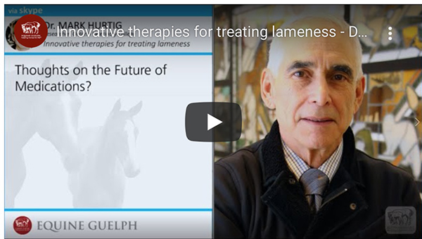 Innovative Research on Equine Lameness and Conditioning Tips