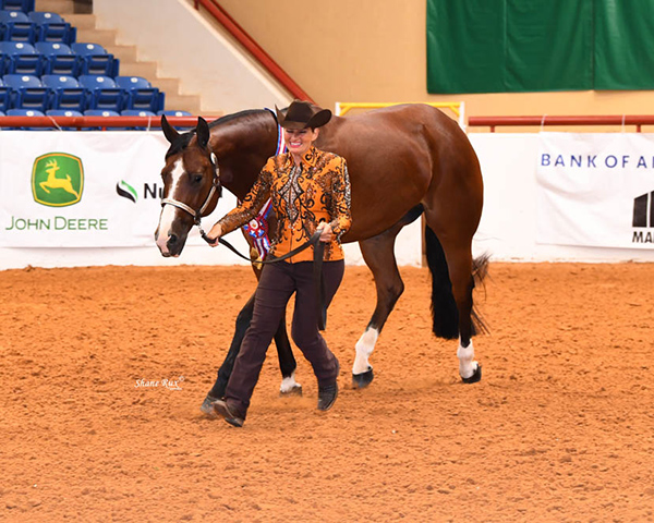 AQHA Approves to Move Forward With Select World Show