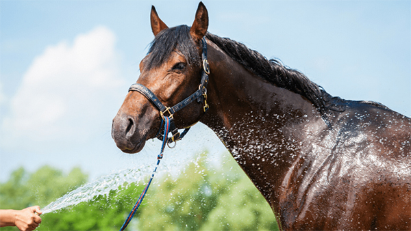 Handling 4 of the Most Common Summer Horse Hazards
