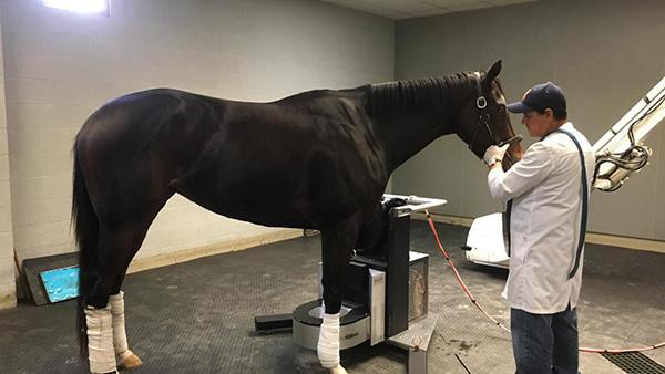 Equine PET Scanner Making Big Strides