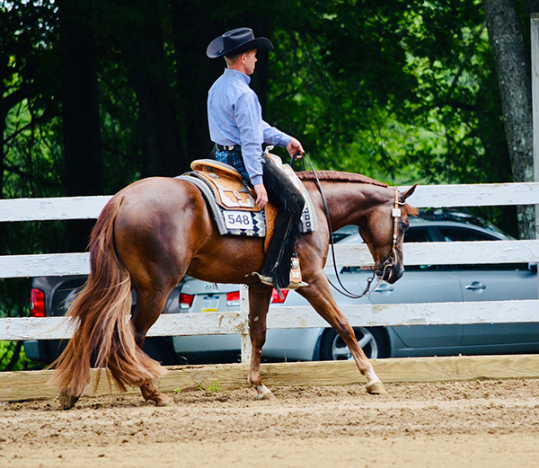Around the Rings Tri State QH- August Show