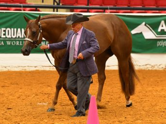 2020 Select World Will Now be Held at AQHA World Show