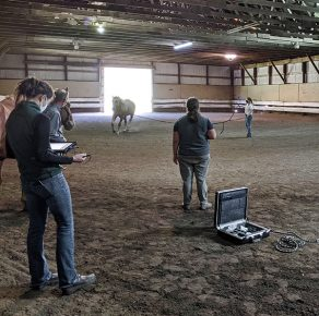 AQHA Horseman Participates in Study Specifically Focused on Performance Horses