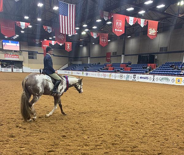 EC TV- APHA World Show- 3-Year-Old Hunter Under Saddle Victory Lap