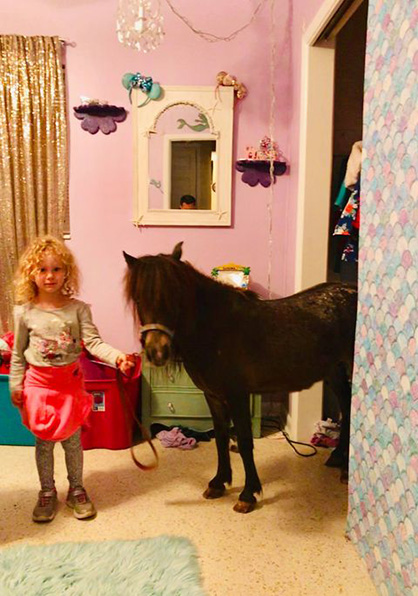 EC Photo of the Day- Horse in the Closet