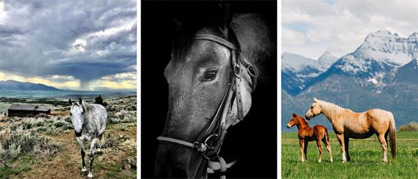 AQHA Photo Contest Now Open