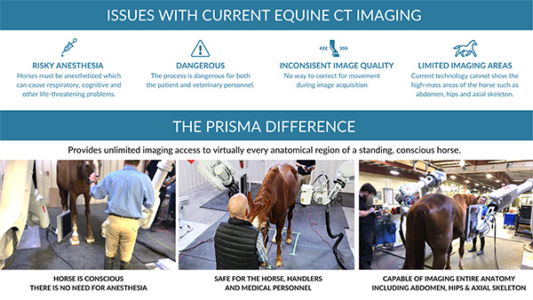 First-Ever Full-Body Equine Vet Imaging For Standing Conscious Horse