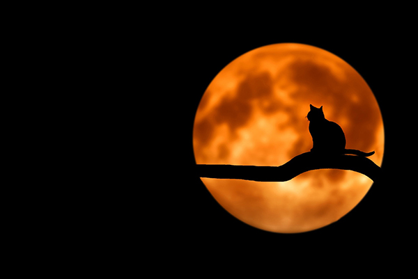 Making Halloween Safe (and Less Scary) for Your Pets