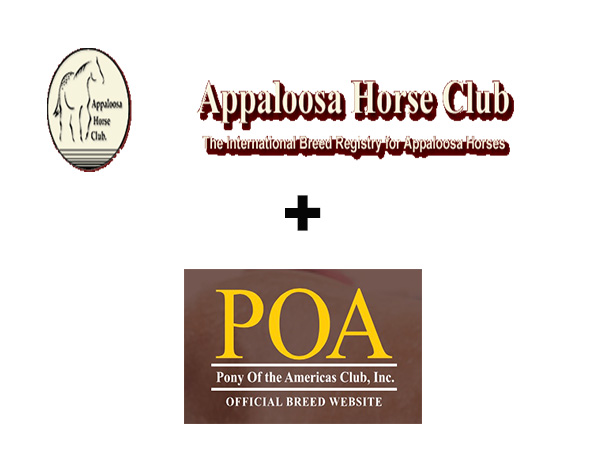 ApHC Opens Doors to POAC With Small Horse Program