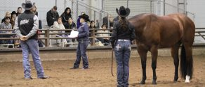 Submit Your Questions For AQHA World Show Ride the Pattern Clinics