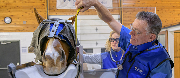 Equine Surgeon Receives Prestigious Honor