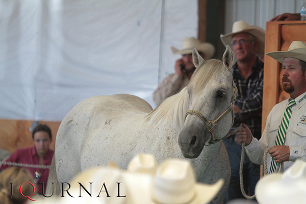 Results From Fall Triangle Sale at AQHA World Show