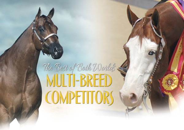 The Best of Both Worlds – Multi-breed Competitors