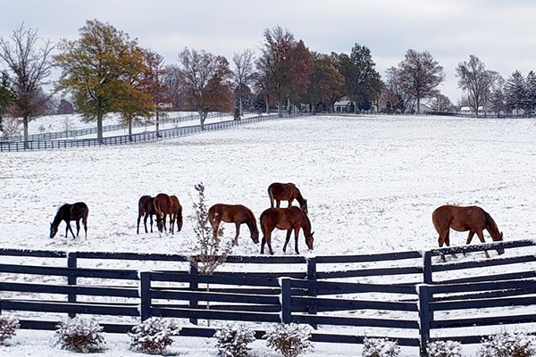 Horse Owners Should Keep Enough Hay For Winter