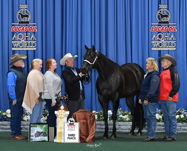 Top Horses to Sell in January Auctions