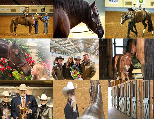 EquineChronicle.com Top 10 Stories of 2020