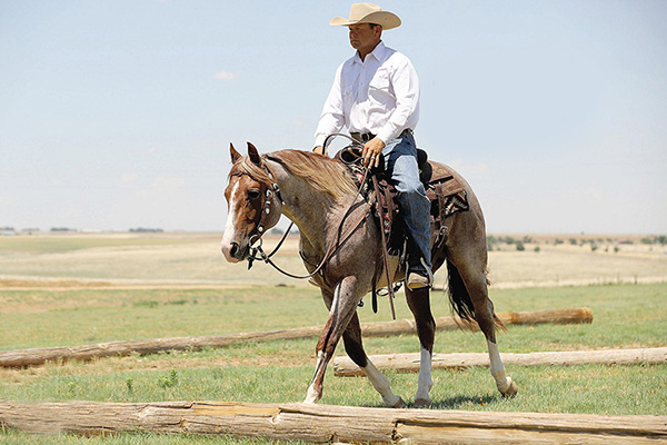 Benefits of Owning a Ranching Heritage Bred Horse