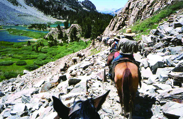 Track Wild Horses in the Inyo National Forest During Summer Horsepacking Courses