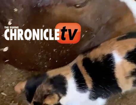 ECTV: Here Kitty Kitty…