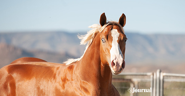 Three Paths to APHA Regular Registry, Thanks to New Rule Change