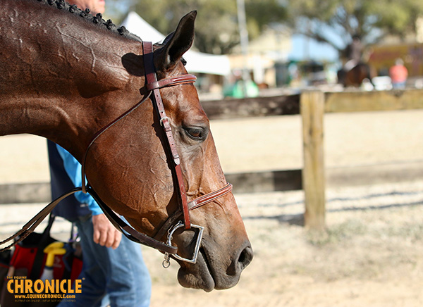 Electrolyte Supplementation for Equine Athletes?
