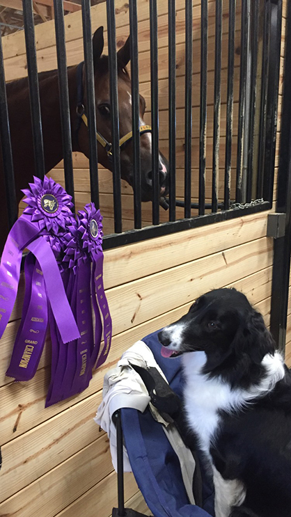 EC Photo of the Day- Who Won These Ribbons?