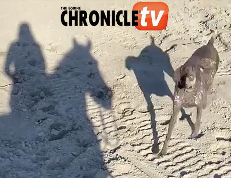 EC TV- Horseback Fetch
