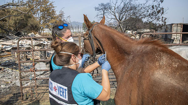 Protecting Animals When Disaster Strikes-  State of CA Creates New Veterinary Emergency Team