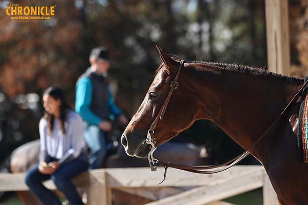Feeding Performance Horses in 5 Easy Steps