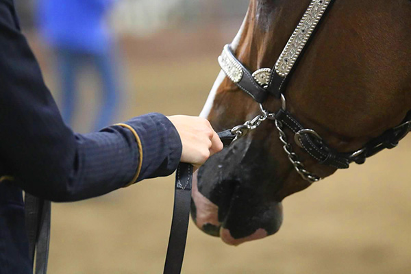 What's Your Chain Preference For Showmanship?