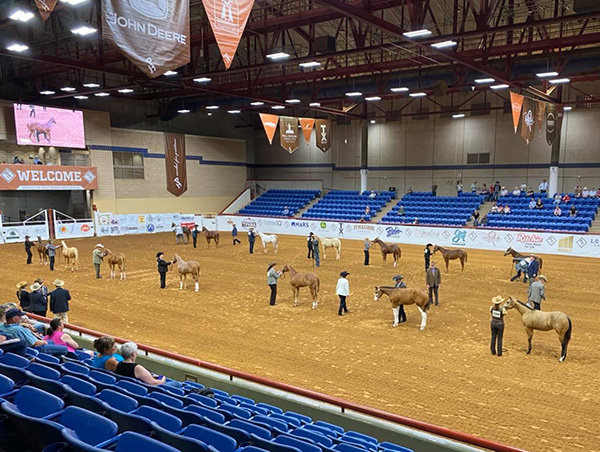 The Lonestar Gathering Kicks Off Today- Watch the Live Feed