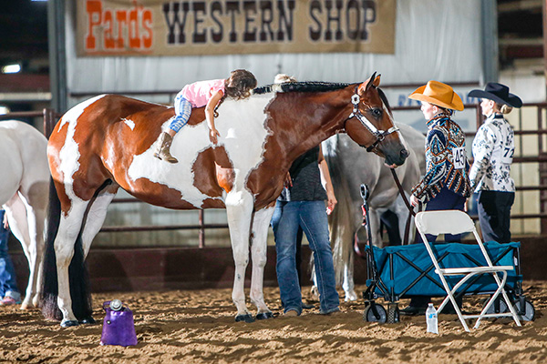 EC Photo of the Day- For the Love of the Horse