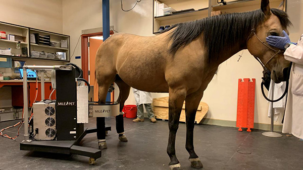 Equine PET Imaging Isn't Just For Racehorses Anymore!