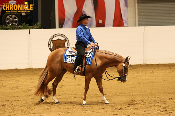 Buy Your Tickets For The Equine Chronicle Congress Masters Event