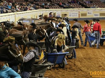 19 Horses to Compete in Pleasure Versatility Challenge at AQHA World- Check Out the Lineup!