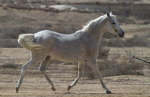 UF Research Provides Insight to Equine Metabolic Syndrome