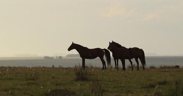 Watch AQHA Videos During Horse Week