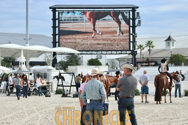 An Equine Production to Manage A Sudden Impulse Futurity AND The Championship Show in 2022