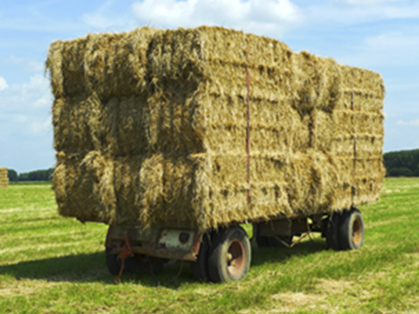 Michigan Hay Prices Lower in 2013 Compared to 2012