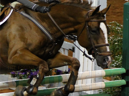 Researchers Measure the Effect of Noseband Pressure on Horses