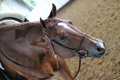 Would Your Noseband Pass the Pressure Test?