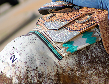 Appaloosa Horse Club Partners With Etalon Diagnostics For Genetic Testing
