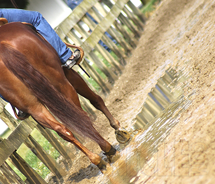 Free Webinar: Arena Footing Solutions for Horse Professionals