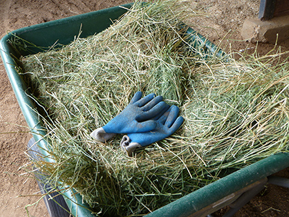 Understanding Hay Quality- Even Good Hay Can Have Bad Things In It
