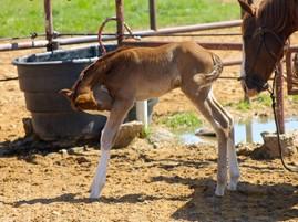 Takes Steps to Prevent Venezuelan Equine Encephalitis