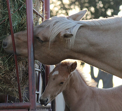 Selecting the Perfect Horse Hay Feeder