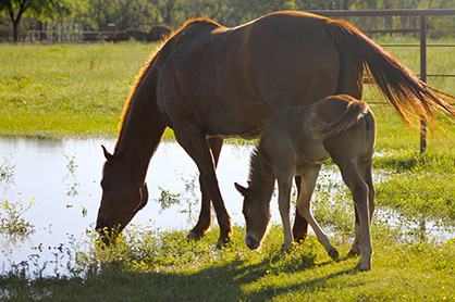 Nutritional Options for Boosting Your Horse's Immune System