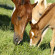Top Equine Nutrition FAQs