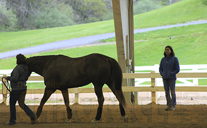Building a Marketing Plan For Your Horse Business