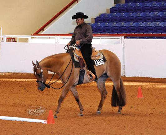 Arturo Maestas Show Horses